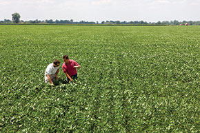 How to produce a better soybean crop on the same amount of acreage without additional irrigation and fertilization