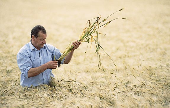 A barley farmer inspects his crop: Food and agribusiness comprise a worldwide $5 trillion industry.